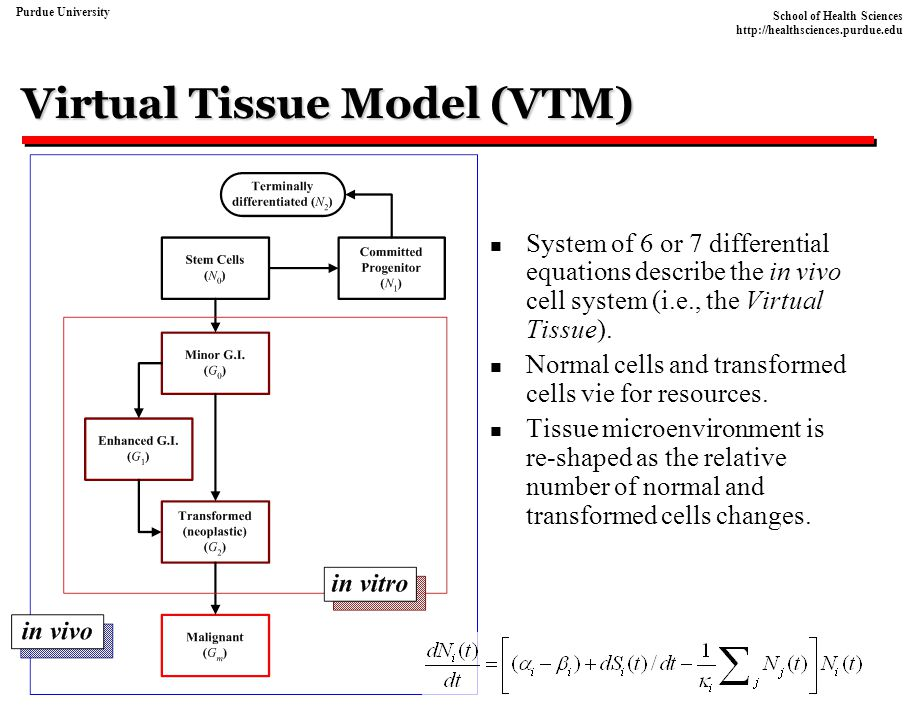 Virtual Tissue Model (VTM)