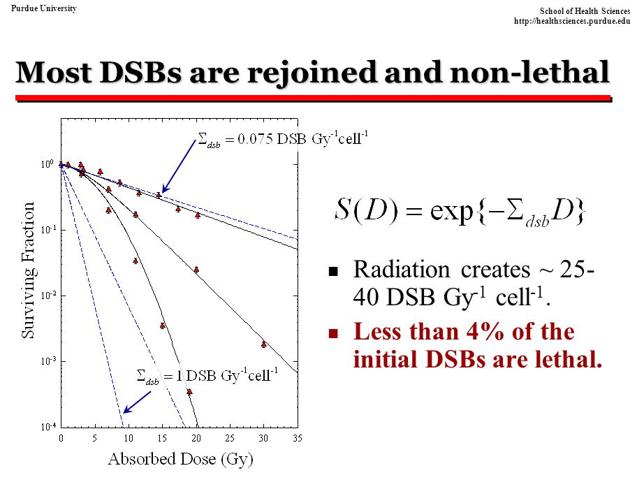 Most DSBs are rejoined and non-lethal