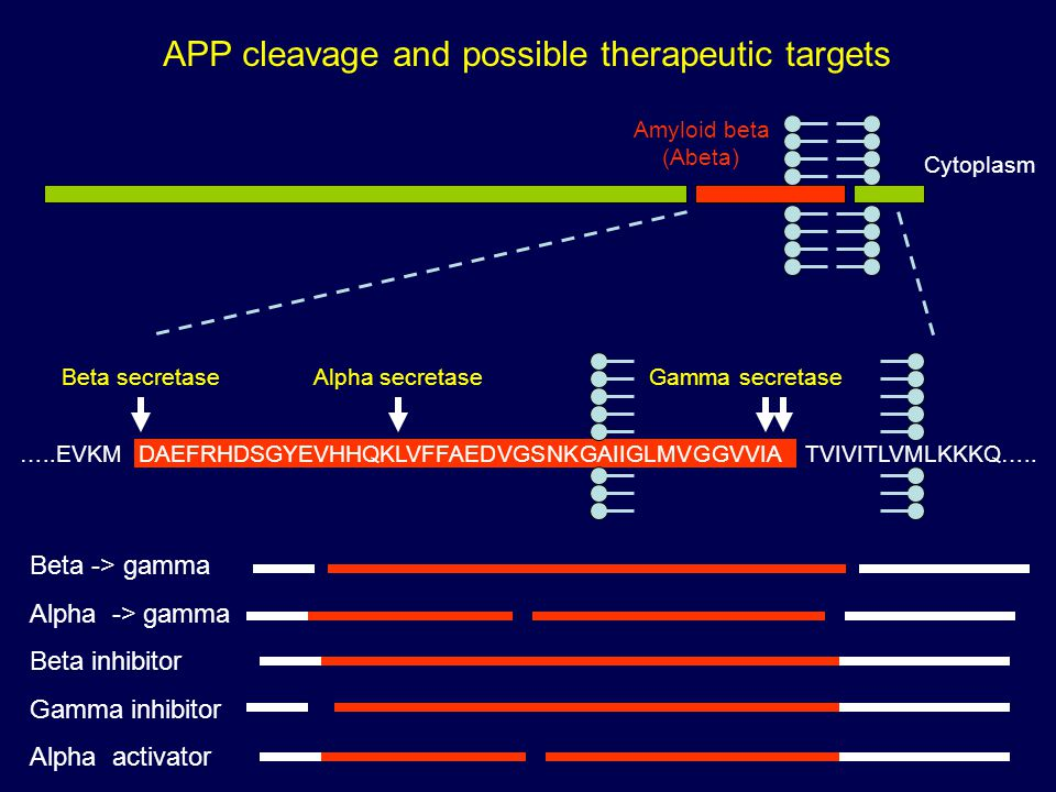 APP cleavage and possible therapeutic targets