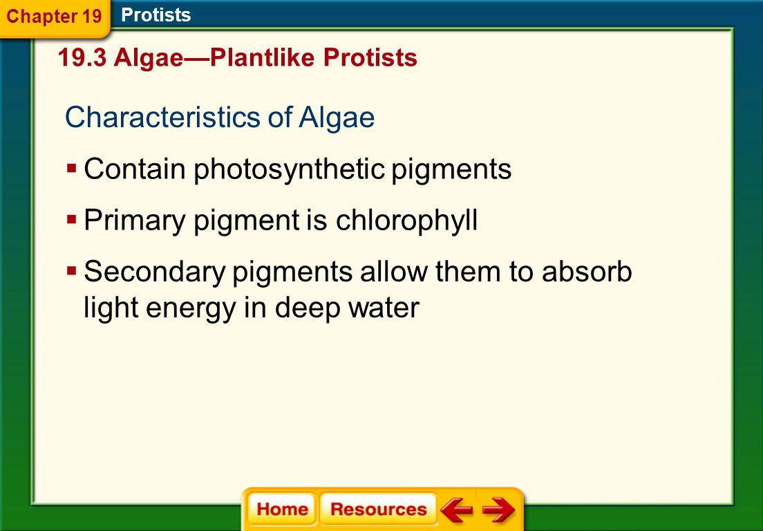 Characteristics of Algae