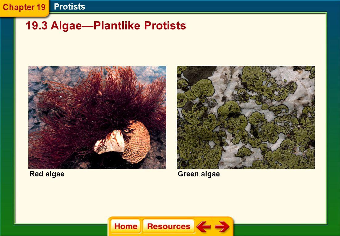 19.3 Algae—Plantlike Protists