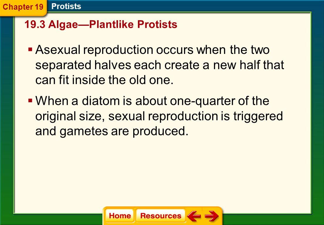 Chapter 19 Protists. 19.3 Algae—Plantlike Protists.