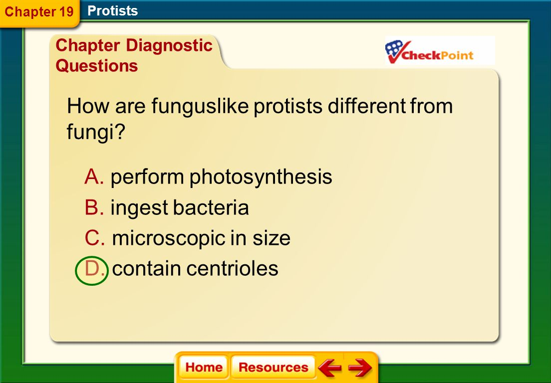How are funguslike protists different from fungi
