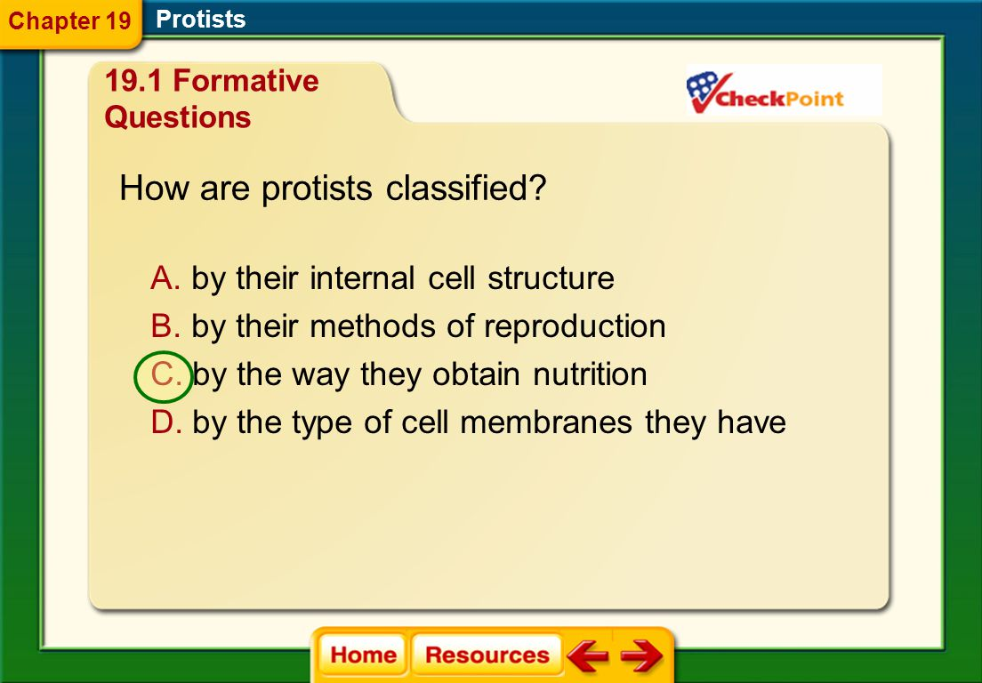 How are protists classified
