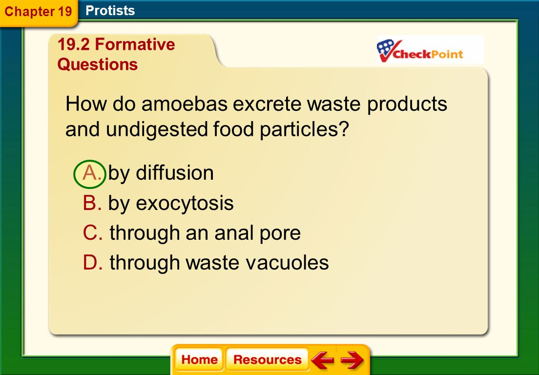 How do amoebas excrete waste products and undigested food particles