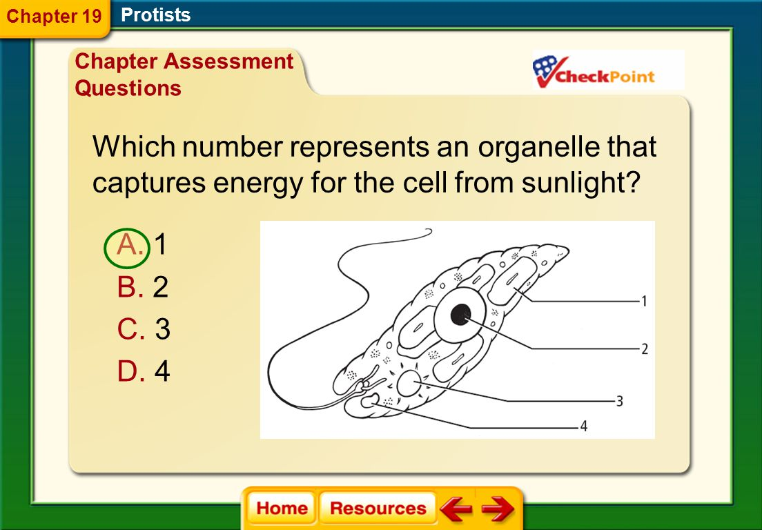 Which number represents an organelle that