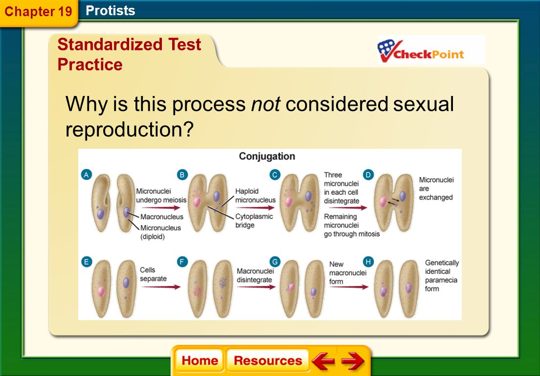 Why is this process not considered sexual reproduction