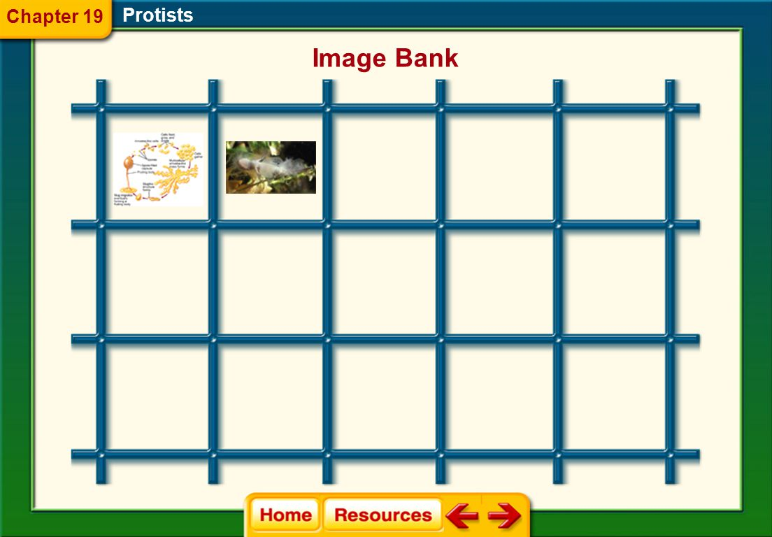 Chapter 19 Protists Image Bank