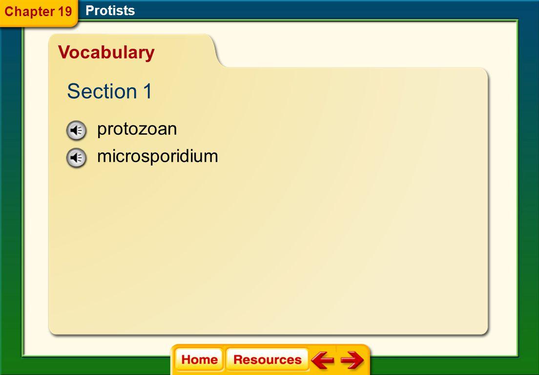 Chapter 19 Protists Vocabulary Section 1 protozoan microsporidium