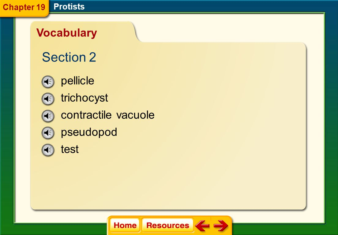Section 2 Vocabulary pellicle trichocyst contractile vacuole pseudopod