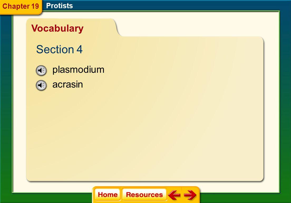 Chapter 19 Protists Vocabulary Section 4 plasmodium acrasin