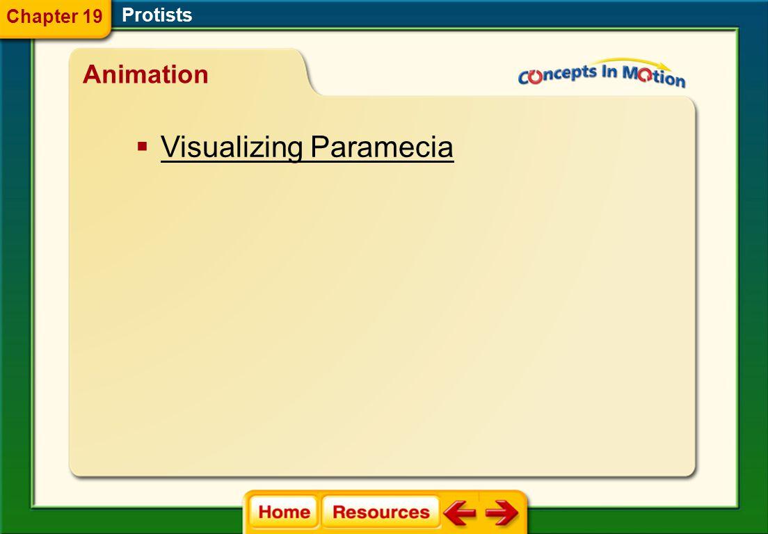 Visualizing Paramecia