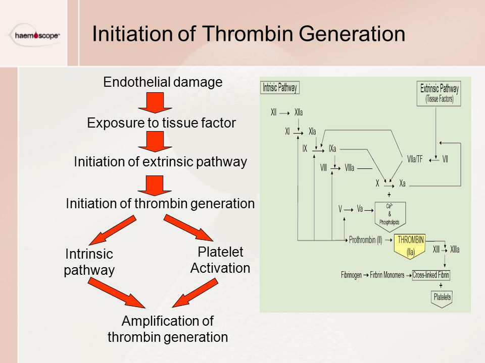 Initiation of Thrombin Generation