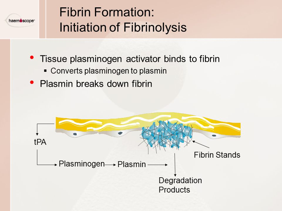 Fibrin Formation: Initiation of Fibrinolysis
