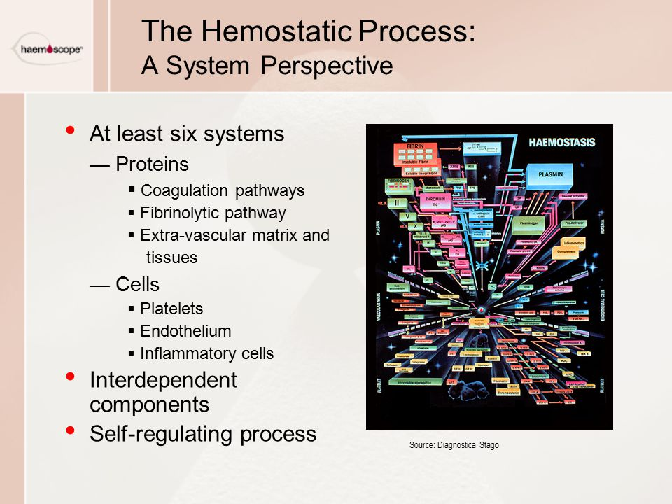 The Hemostatic Process: A System Perspective