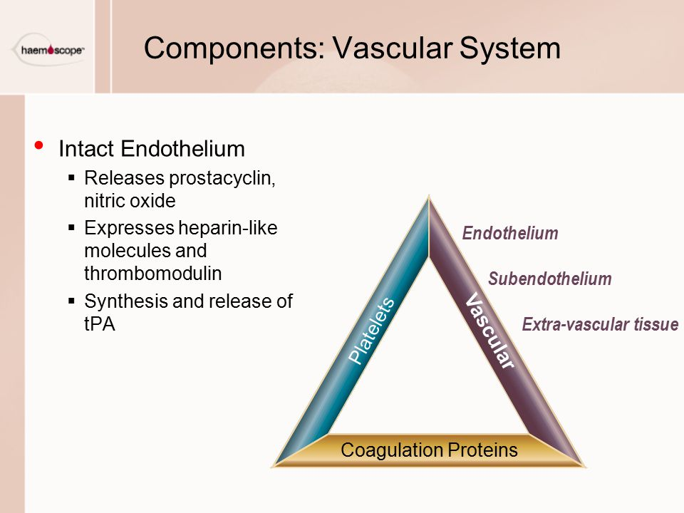 Components: Vascular System