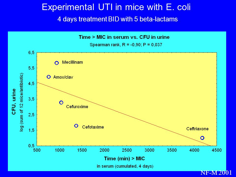 Experimental UTI in mice with E. coli