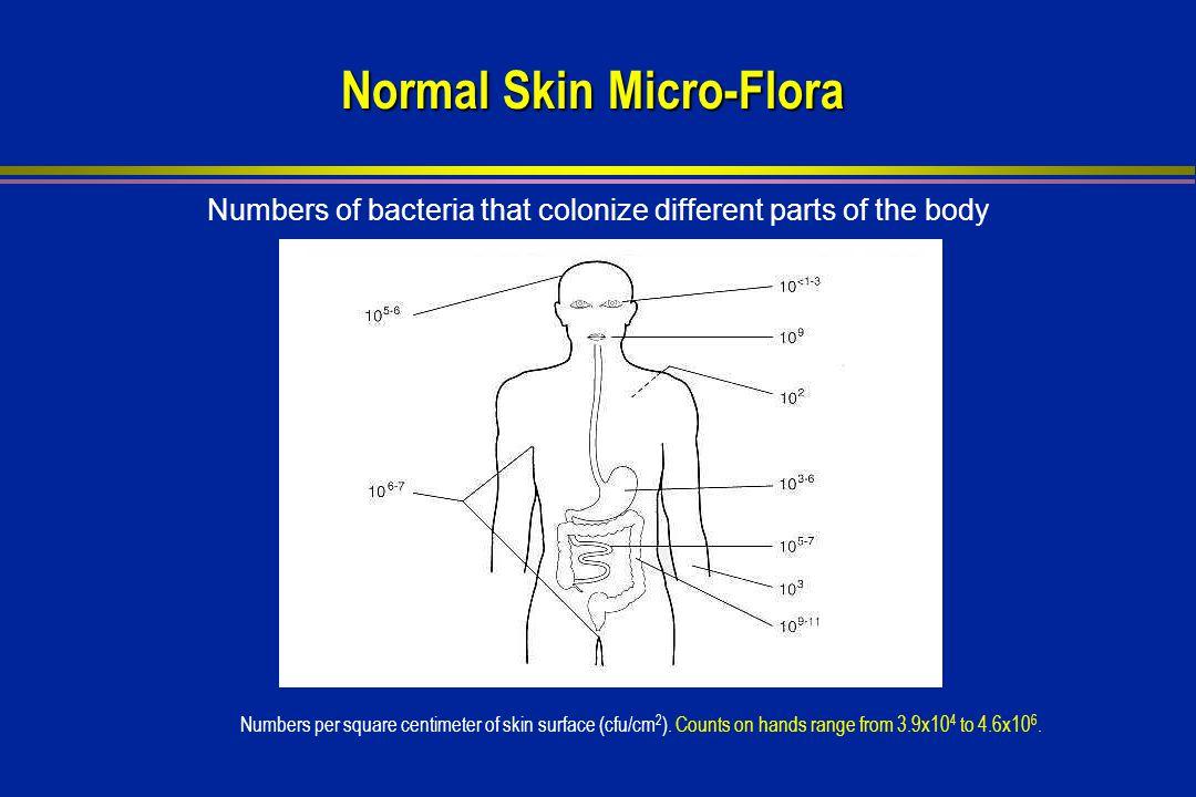 Normal Skin Micro-Flora