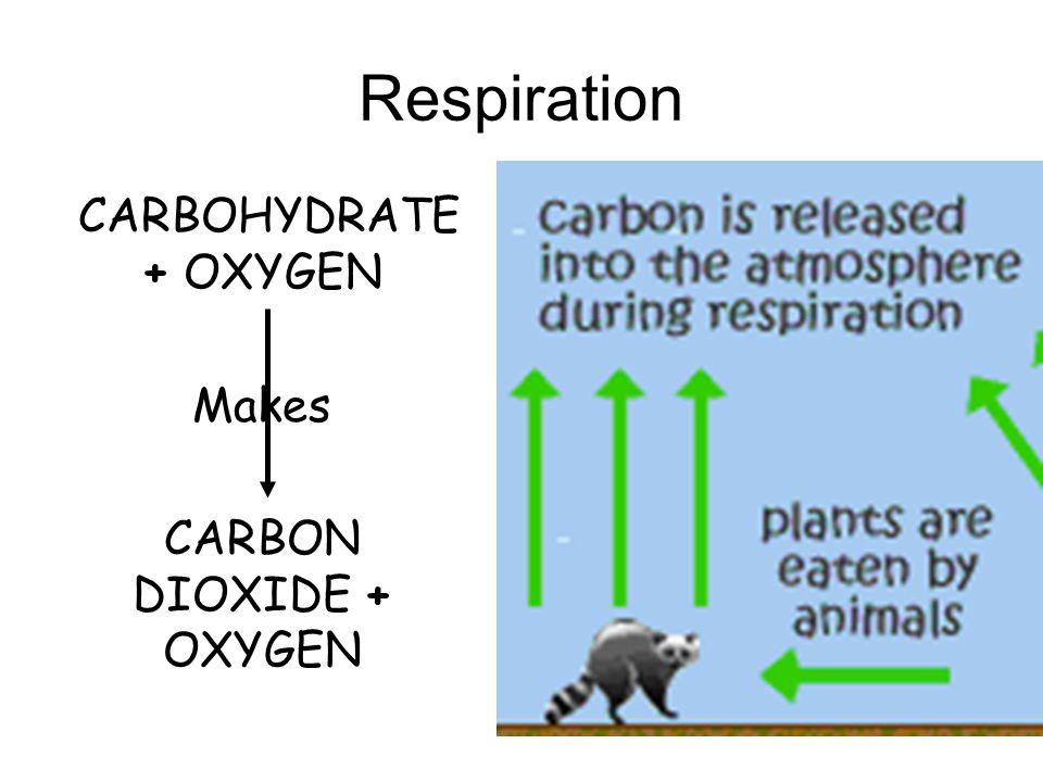 CARBON DIOXIDE + OXYGEN