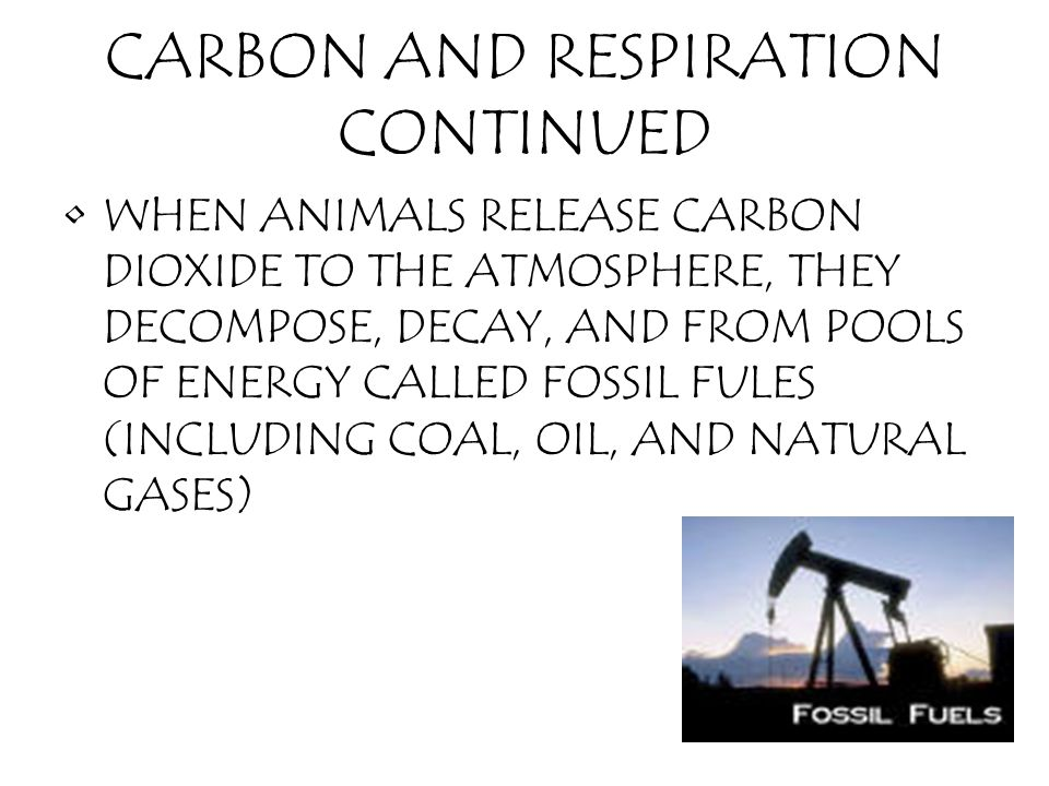 CARBON AND RESPIRATION CONTINUED