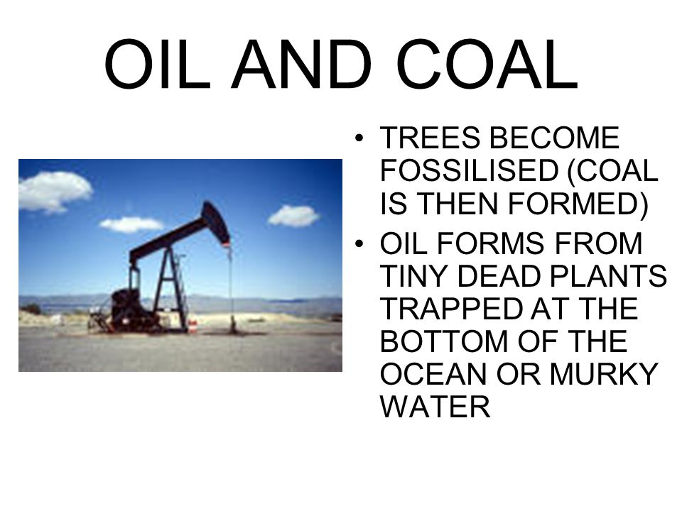 OIL AND COAL TREES BECOME FOSSILISED (COAL IS THEN FORMED)