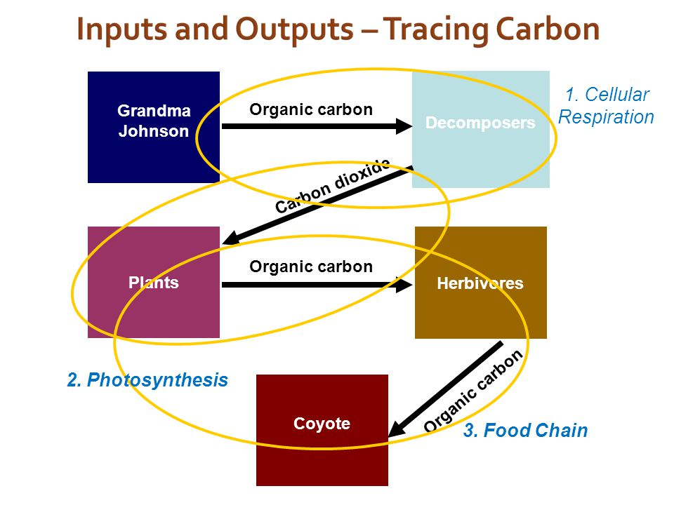 2. Photosynthesis 3. Food Chain