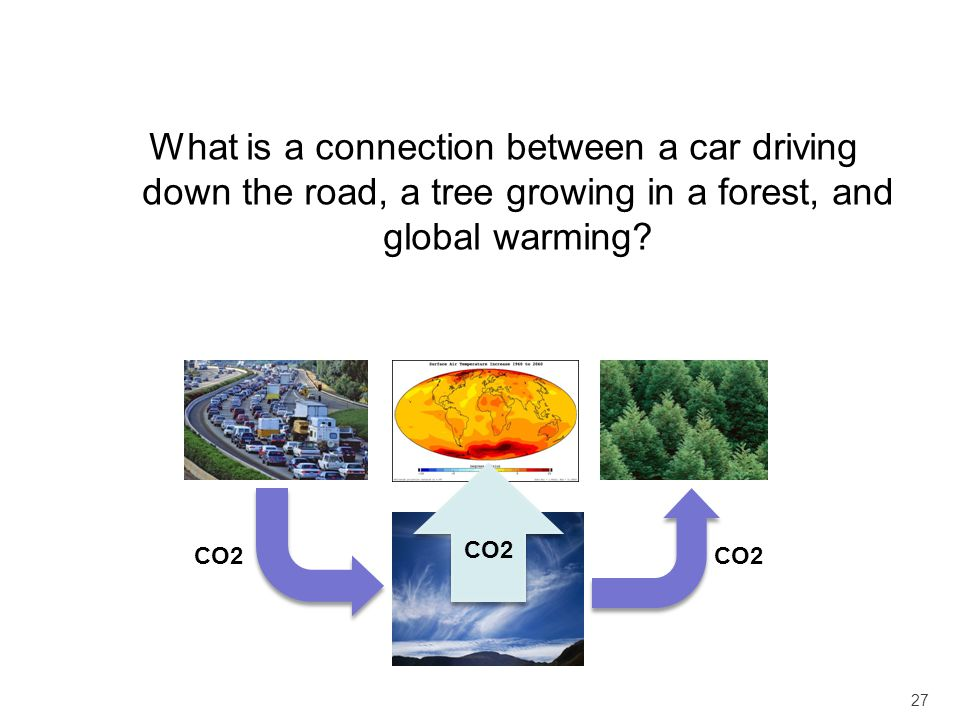 What is a connection between a car driving down the road, a tree growing in a forest, and global warming