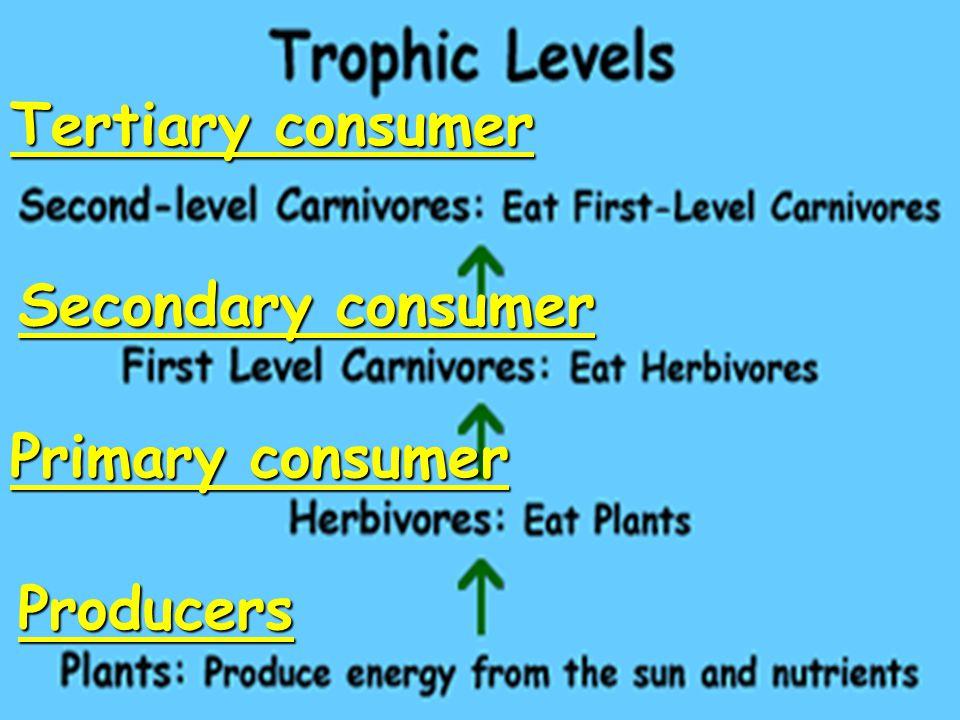 Tertiary consumer Secondary consumer Primary consumer Producers