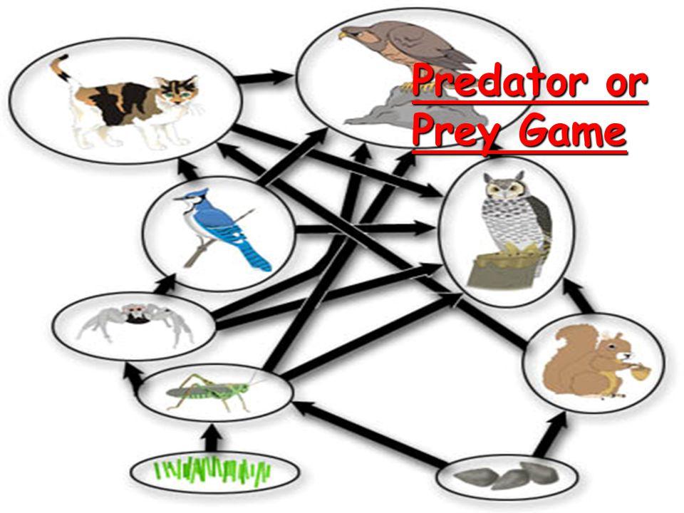 Predator or Prey Game