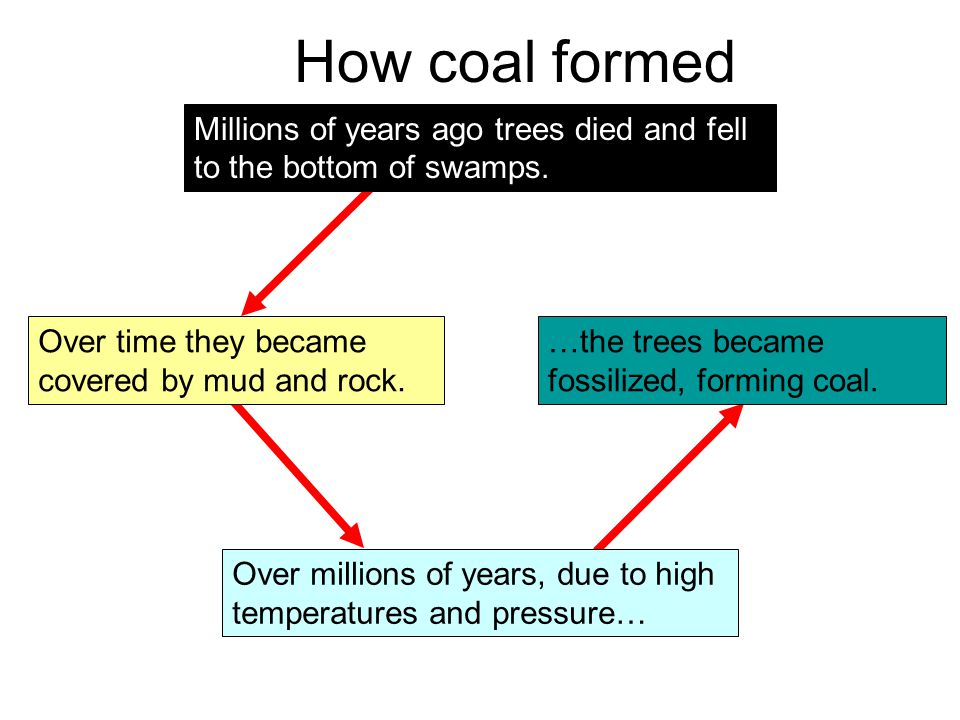 How coal formed Millions of years ago trees died and fell to the bottom of swamps. Over time they became covered by mud and rock.