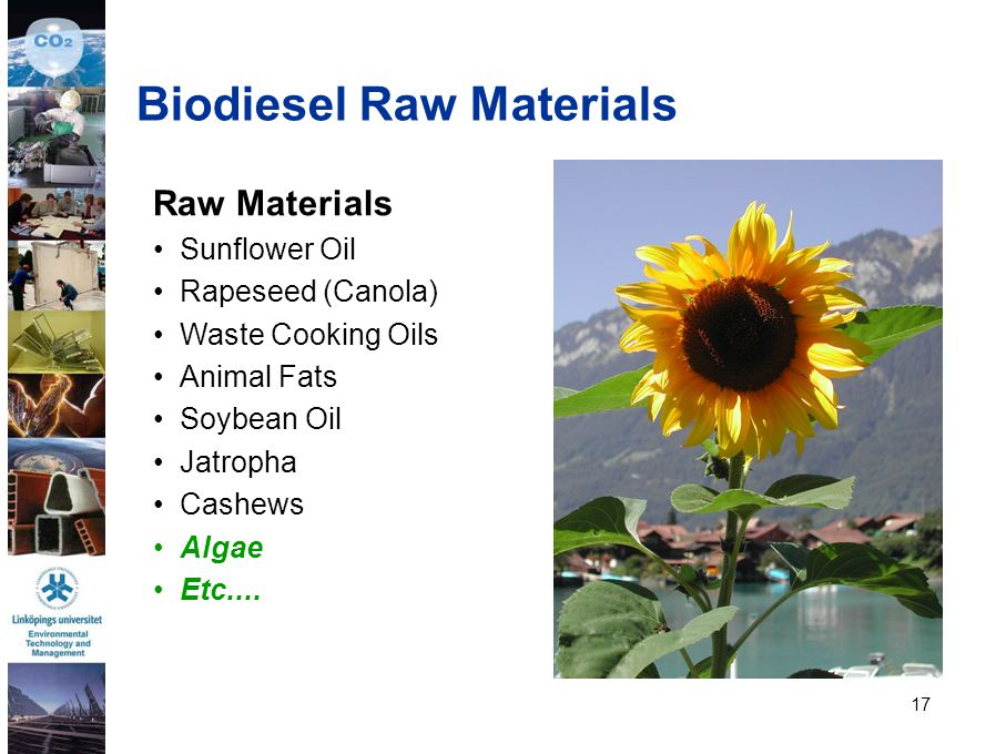 Biodiesel Raw Materials
