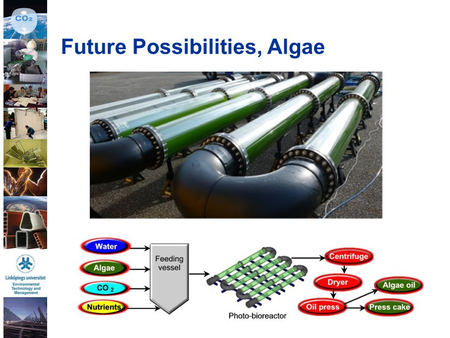 Future Possibilities, Algae