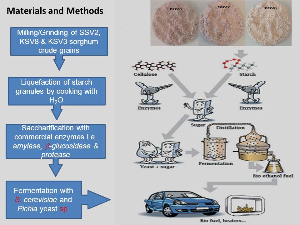Milling/Grinding of SSV2, KSV8 & KSV3 sorghum crude grains