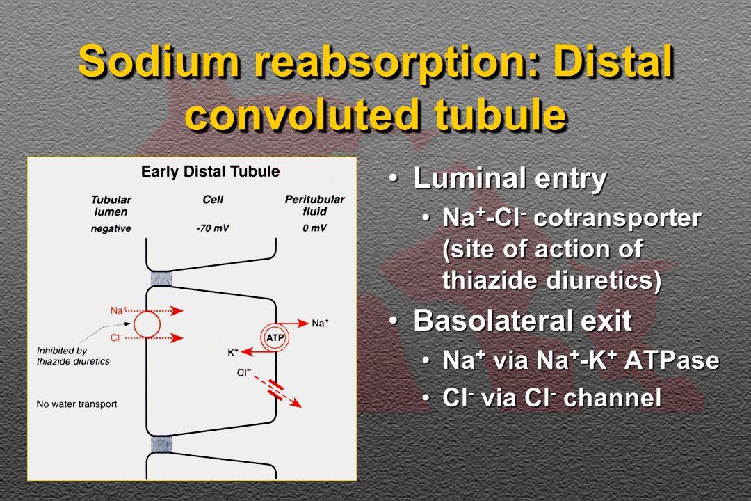 Sodium reabsorption: Distal convoluted tubule