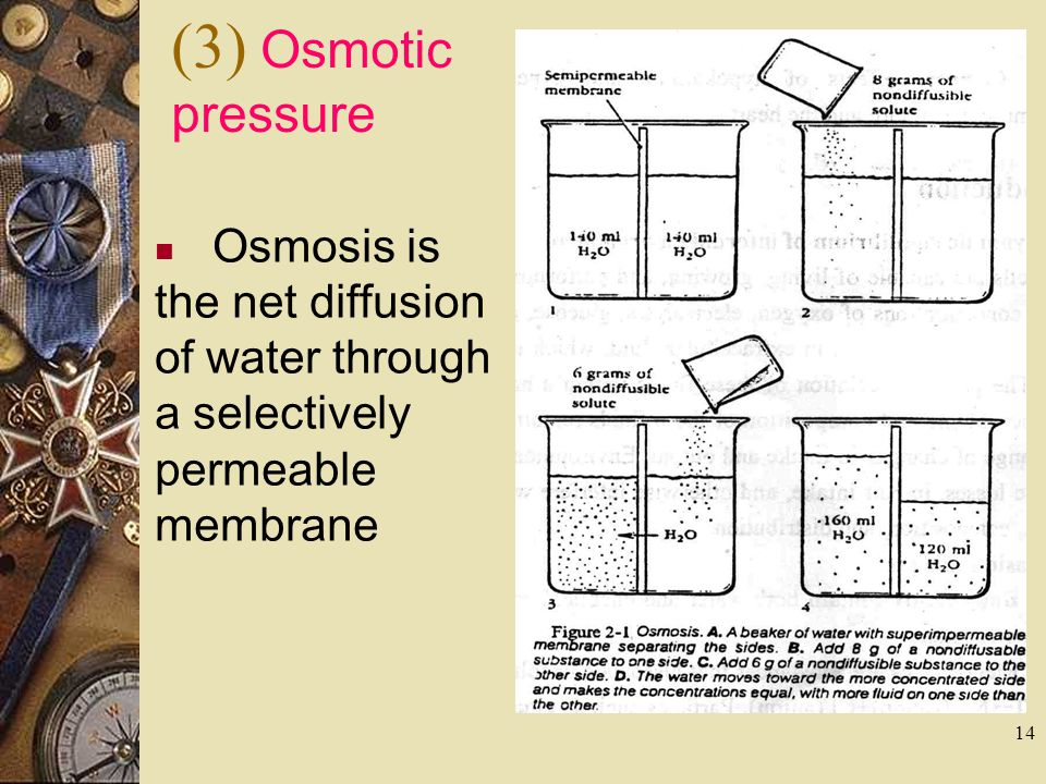 (3) Osmotic pressure Osmosis is the net diffusion of water through a selectively permeable membrane
