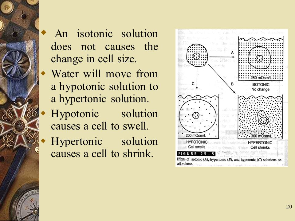 An isotonic solution does not causes the change in cell size.