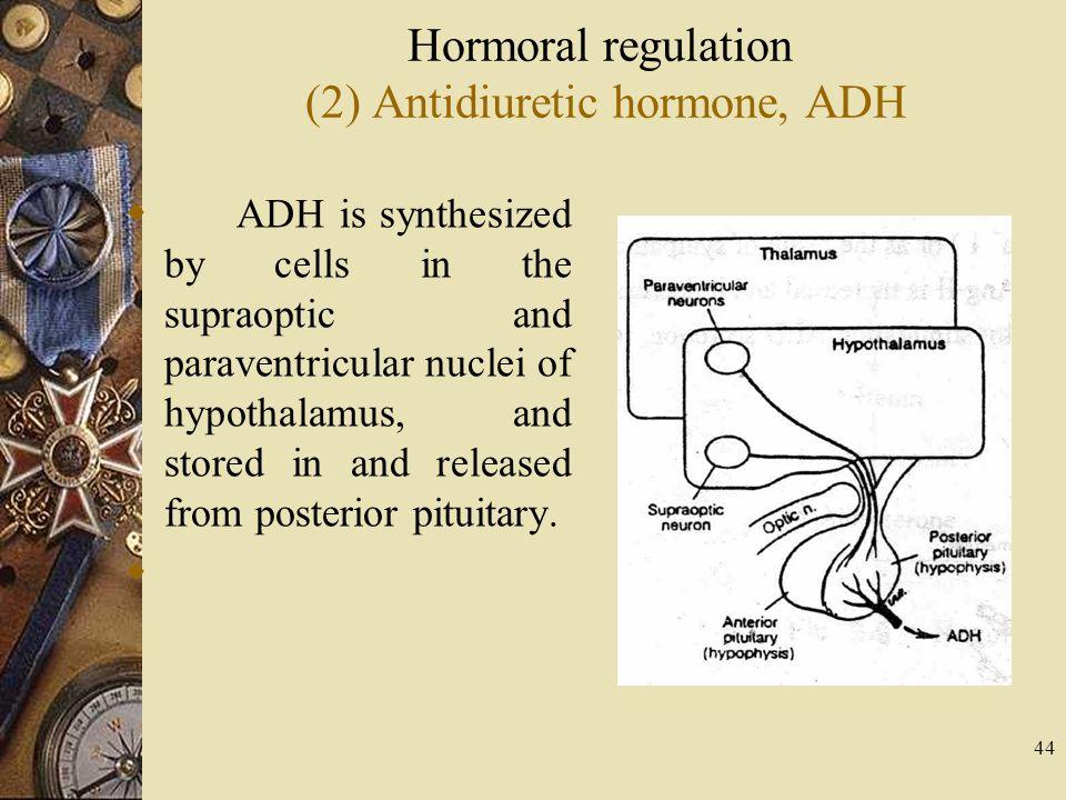 Hormoral regulation (2) Antidiuretic hormone, ADH