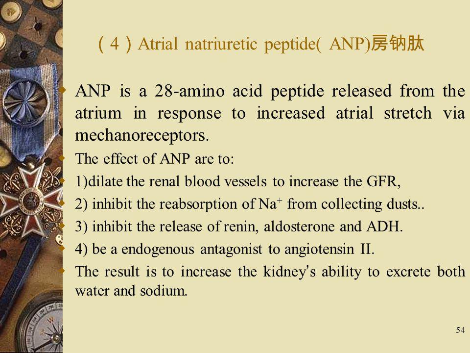(4)Atrial natriuretic peptide( ANP)房钠肽