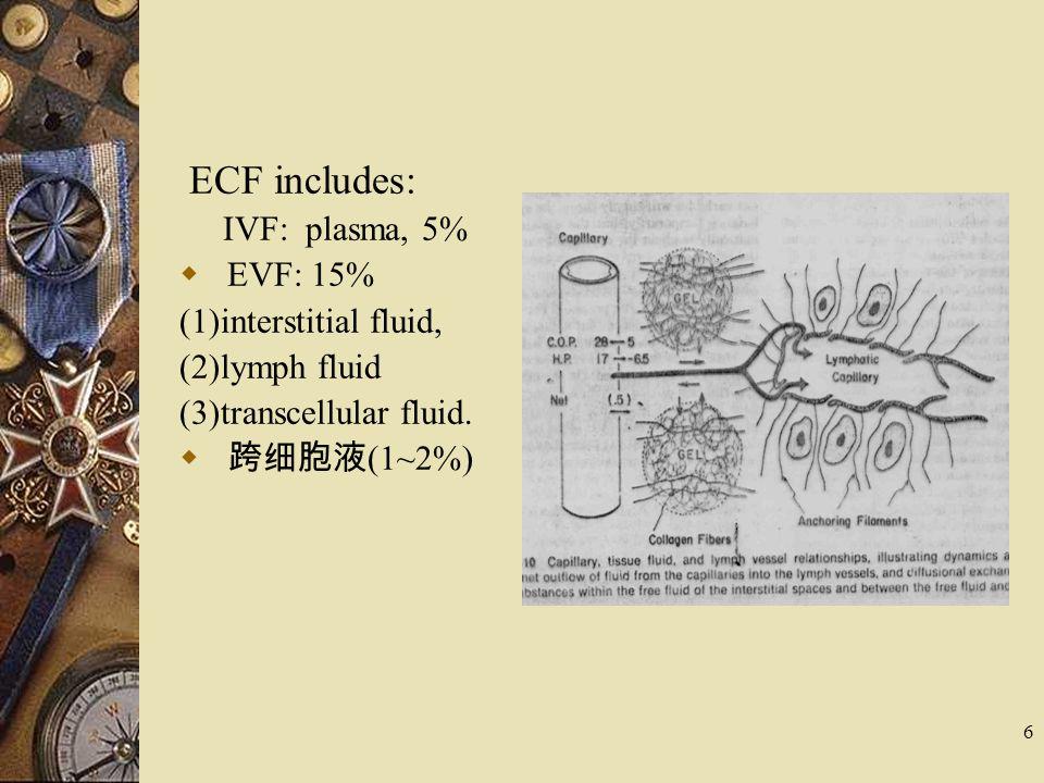 ECF includes: IVF: plasma, 5% EVF: 15% (1)interstitial fluid,