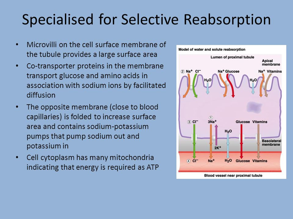 Specialised for Selective Reabsorption