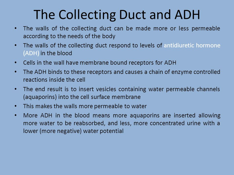 The Collecting Duct and ADH