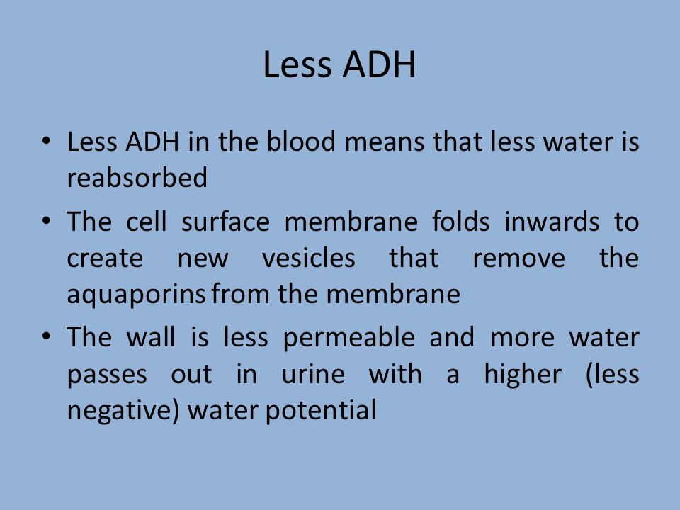 Less ADH Less ADH in the blood means that less water is reabsorbed