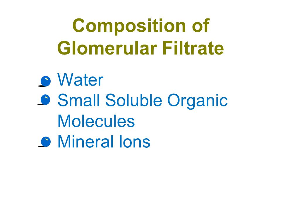 Composition of Glomerular Filtrate