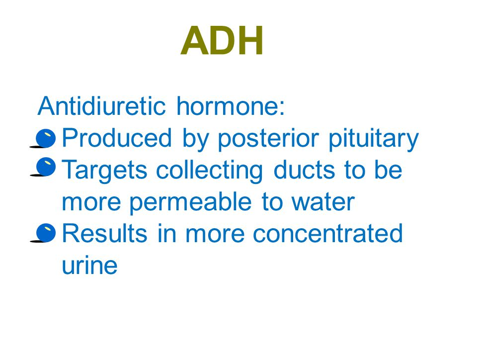 ADH Antidiuretic hormone: Produced by posterior pituitary
