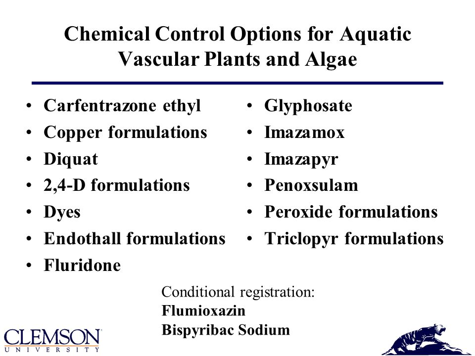 Chemical Control Options for Aquatic Vascular Plants and Algae