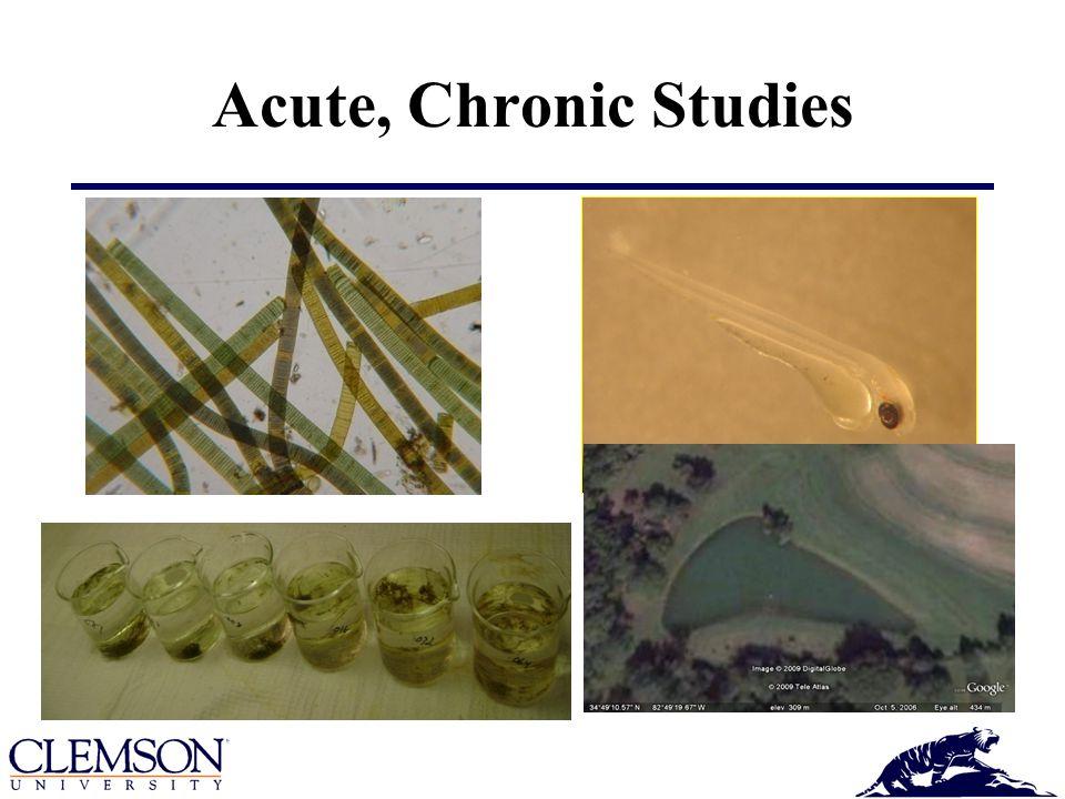 Acute, Chronic Studies