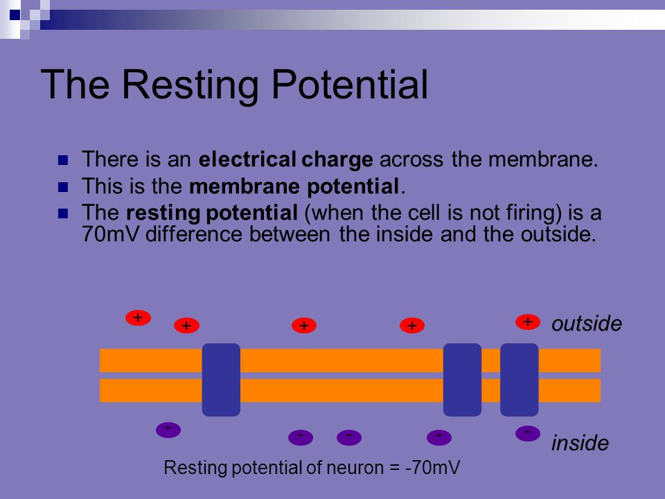 Resting potential of neuron = -70mV