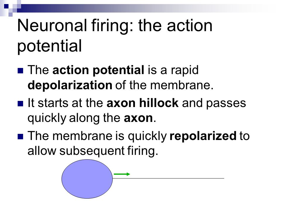 Neuronal firing: the action potential
