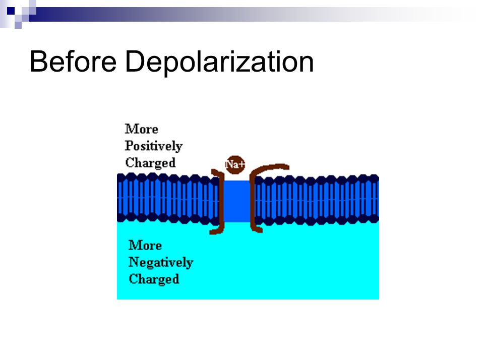 Before Depolarization