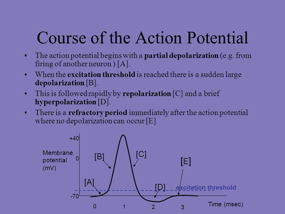 Course of the Action Potential